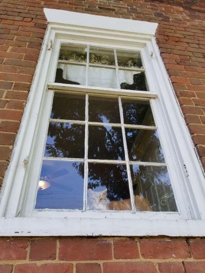 107 w. academy street cat-window.jpg